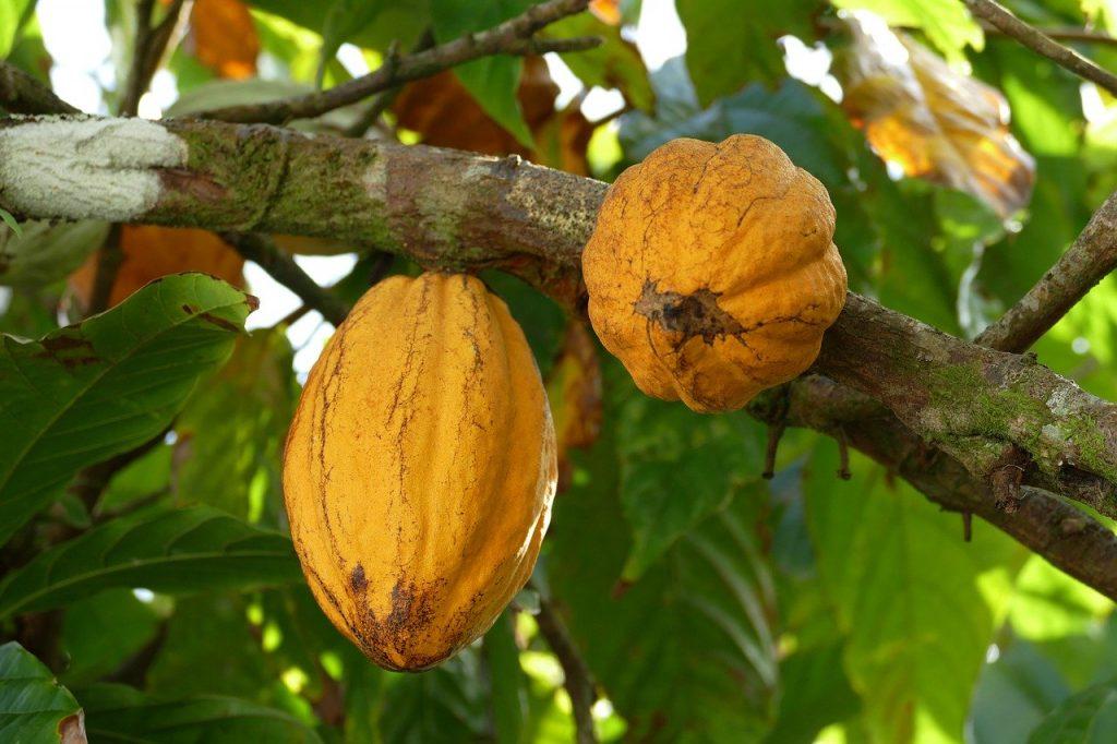 achetez le meilleur beurre de cacao