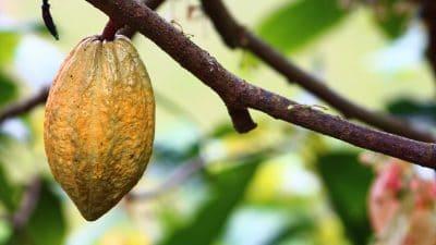 acheter le meilleur beurre de cacao